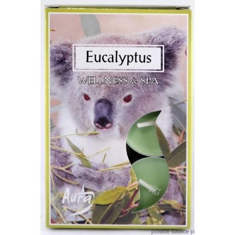 Podgrzewacze zapachowe EUKALIPTUS