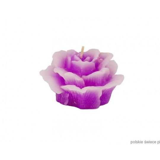 Świeca pływająca róża średnia