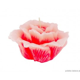 Świeca pływająca róża duża